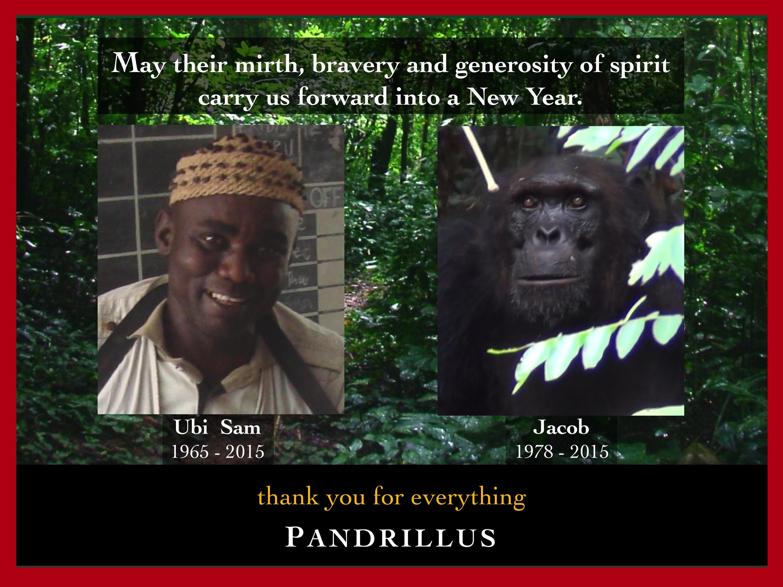 Holiday Greetings From Pandrillus Pandrillus